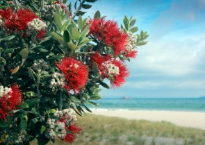 Naturally Ours – NZ's Best Beauty Ingredients